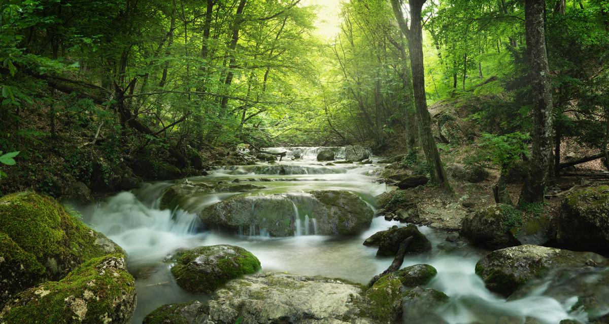 vinilo naturaleza bosque rio paisaje fotografia pared mural