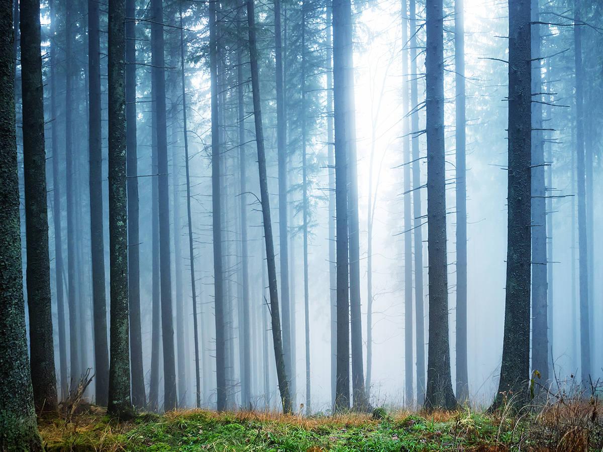 mural impreso niebla bosque vinilo